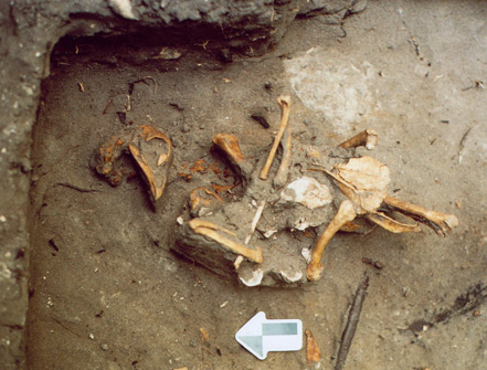 View of the chicken (skeleton), found buried in the floor of Cabin W-15 during the 2006 field season. Designated as Feature 4, it is believed to represent an animal sacrifice made to dedicate the structure during its initial construction in 1814. (Courtesy of James M. Davidson)