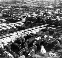 Union Stock Yards, Chicago, 1903. (LC-USZ62-51793)