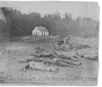 The Field at Antietam [stereoview]